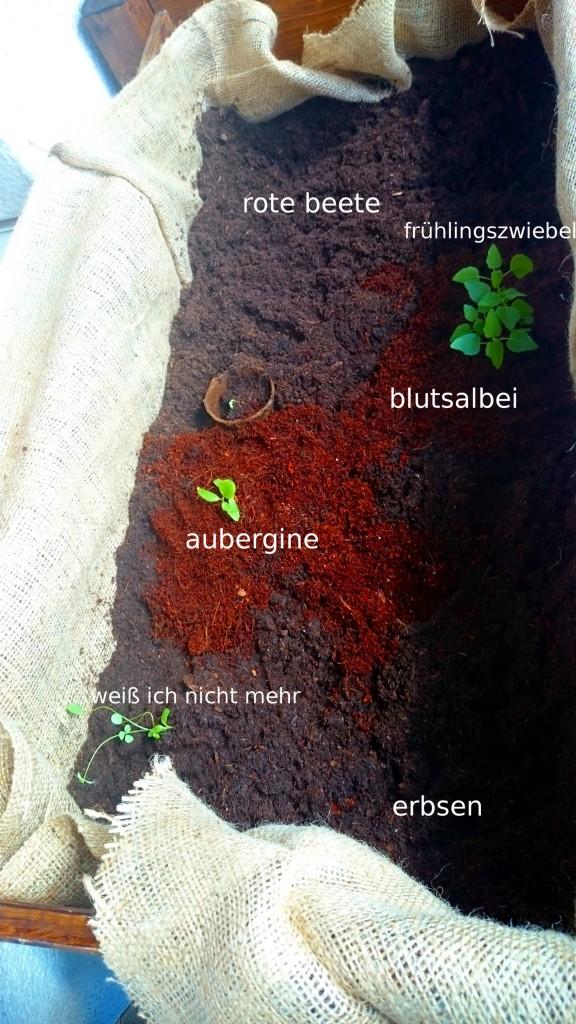 eingepflanzt